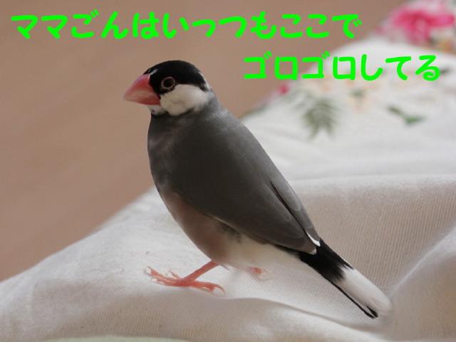 b0158061_20424684.jpg