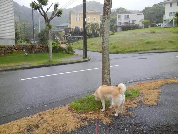 '13,5,20(月)雨の日も楽し~!_f0060461_8562263.jpg
