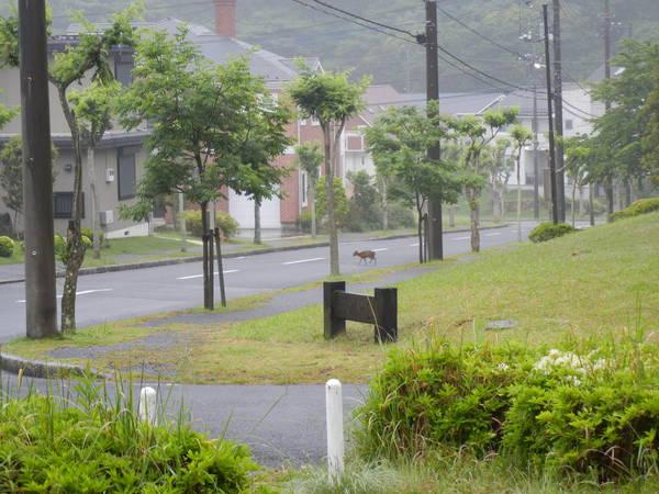 '13,5,20(月)雨の日も楽し~!_f0060461_925066.jpg