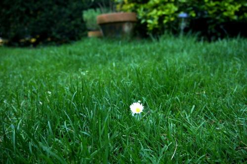 庭の出来事!_d0129786_16215081.jpg