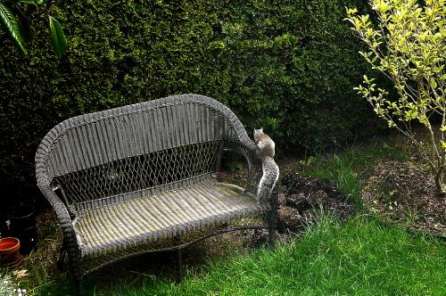 庭の出来事!_d0129786_16262995.jpg