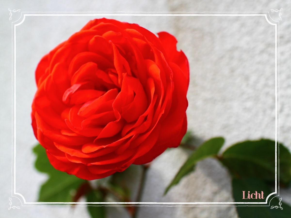 c0295788_0114514.jpg