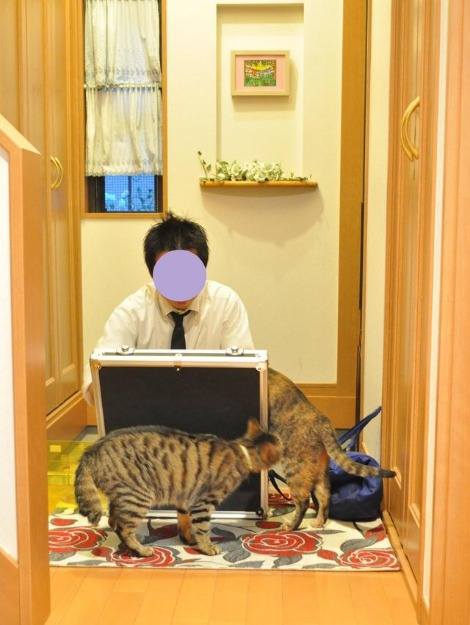 猫好き_a0126590_23452225.jpg