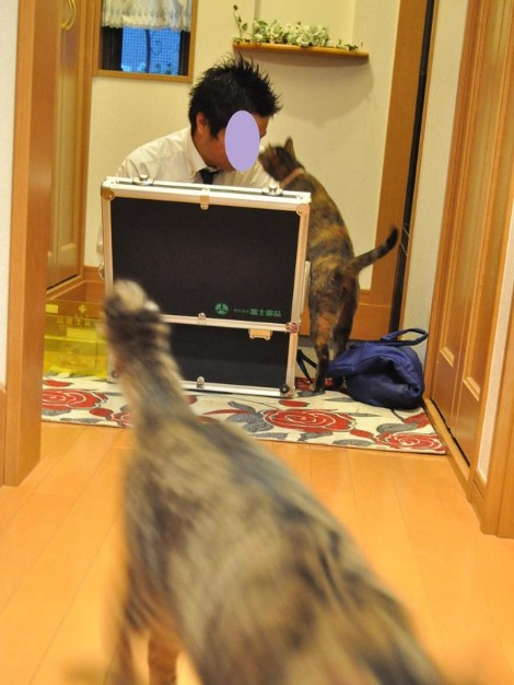 猫好き_a0126590_2346118.jpg