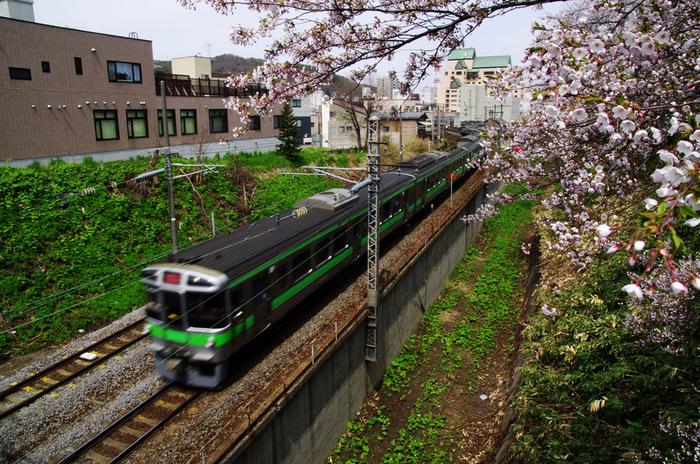 小樽桜めぐり2013  #01_b0103798_5244685.jpg