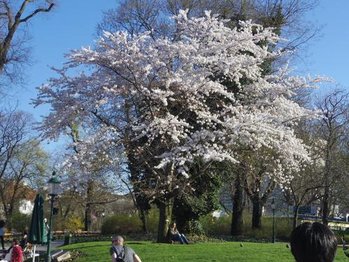 ウィーン&ロンドンへの旅(6)―ウィーン市内散策、ベルヴェデーレ宮殿、公園、子ども_e0123104_6443284.jpg