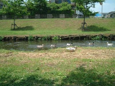 バードウォッチング ~ 秋津川 ~_b0228113_17462593.jpg