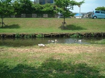 バードウォッチング ~ 秋津川 ~_b0228113_17472023.jpg
