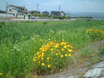 バードウォッチング ~ 秋津川 ~_b0228113_1751572.jpg