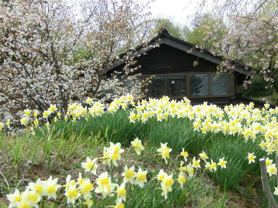 春。。。_f0046622_2304393.jpg