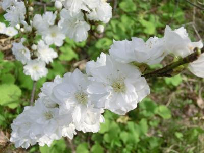 春。。。_f0046622_231211.jpg