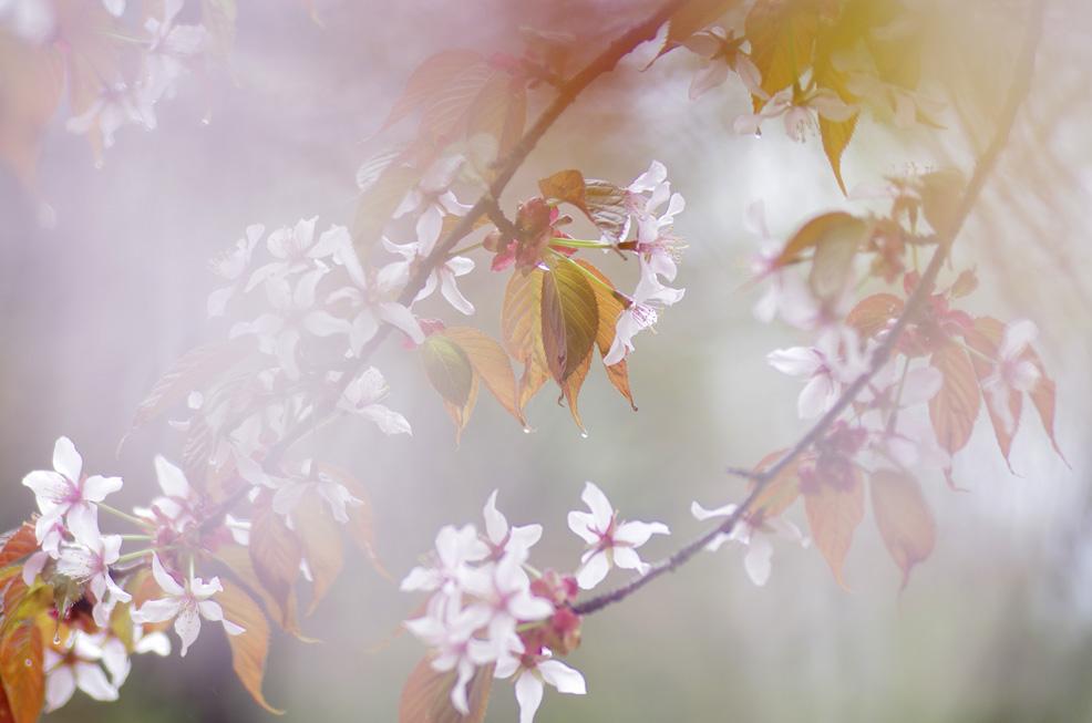 桜の園_f0152939_514337.jpg