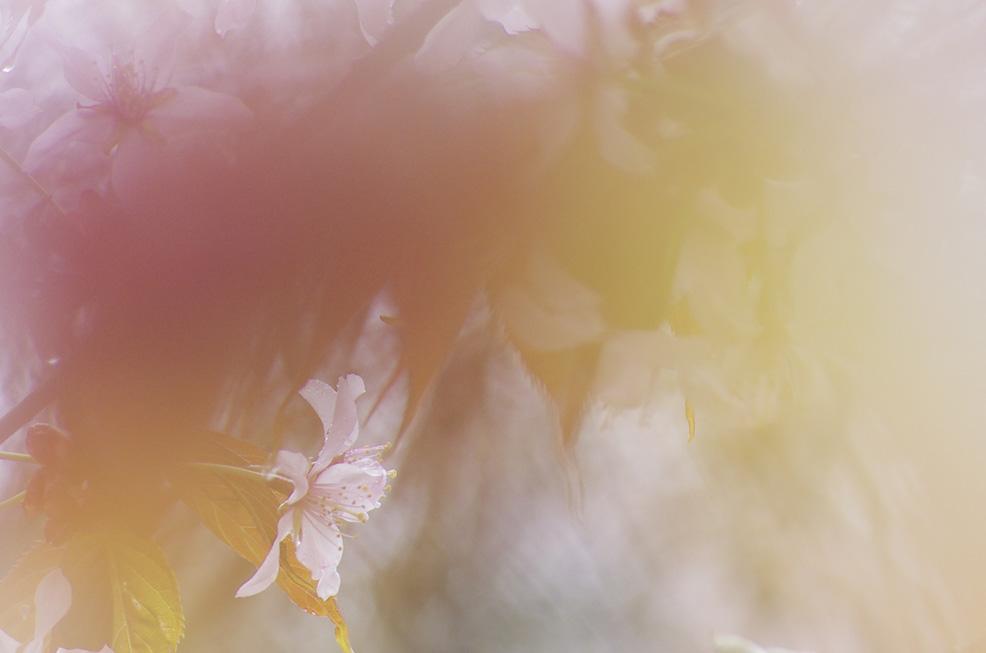 桜の園_f0152939_52285.jpg