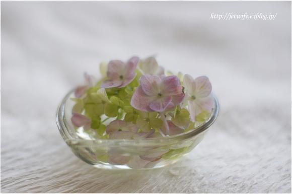 花の殺生 紫陽花_a0254243_2315498.jpg