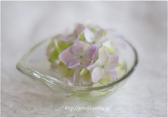 花の殺生 紫陽花_a0254243_23171581.jpg