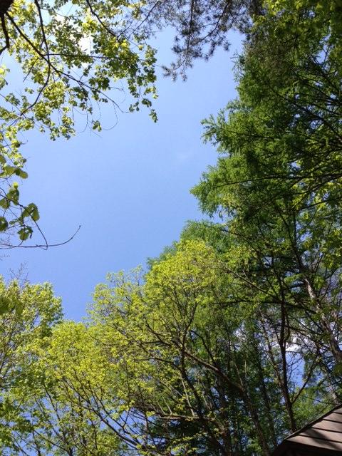 新緑が眩しい一日となりました!_b0147051_1456111.jpg
