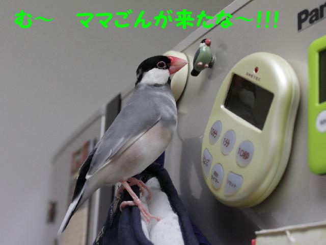 b0158061_21414726.jpg