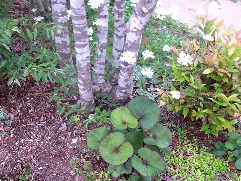 お客様のお庭で・・・・・_b0137969_18255172.jpg
