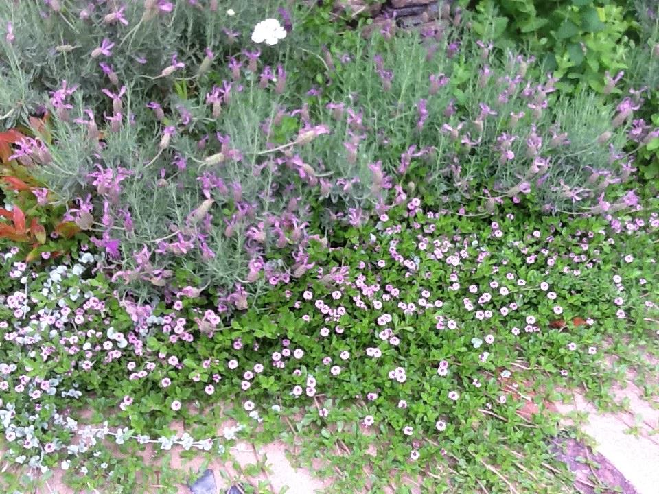 お客様のお庭で・・・・・_b0137969_18273181.jpg