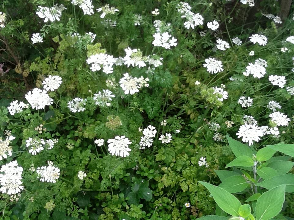 お客様のお庭で・・・・・_b0137969_18324621.jpg