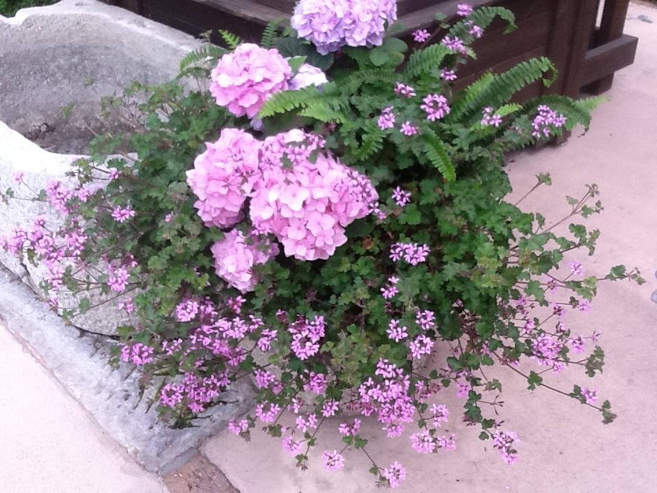 お客様のお庭で・・・・・_b0137969_1894712.jpg