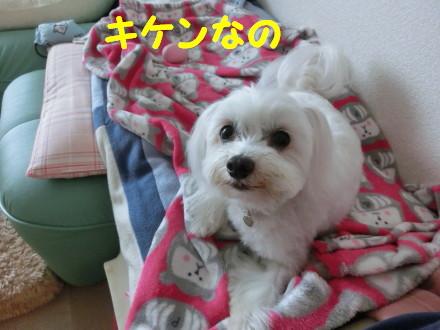 b0193480_14205130.jpg