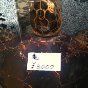 海亀(大)3,000円_a0085581_1311742.jpg