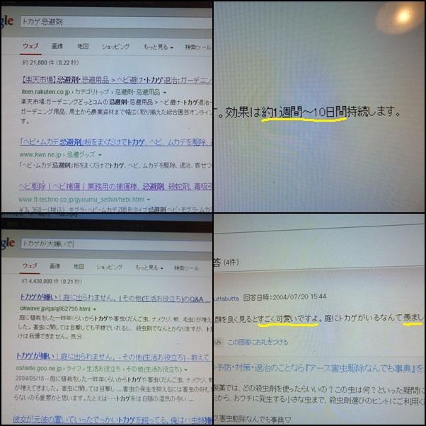 e0234881_2274426.jpg