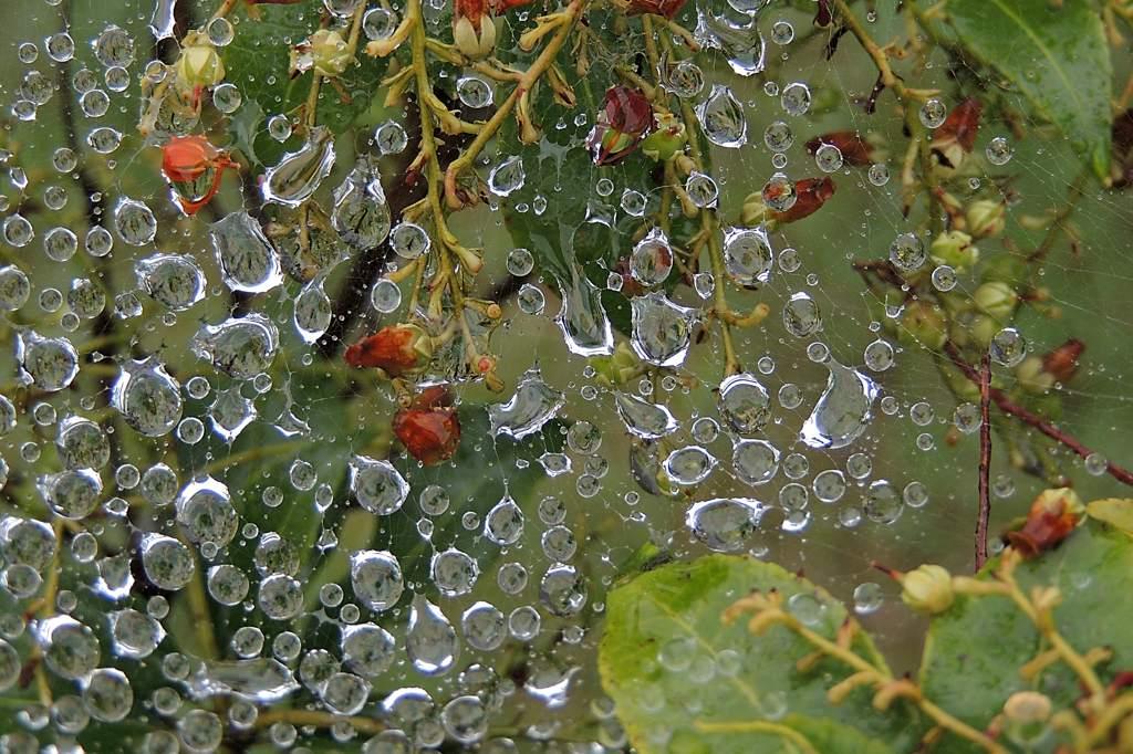 超々低空ホバ/公園のささやかな雛祭り/雨上がりの雫_b0024798_2145281.jpg