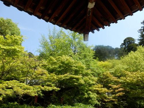 今熊野観音寺 ここも青もみじ_e0048413_2123750.jpg