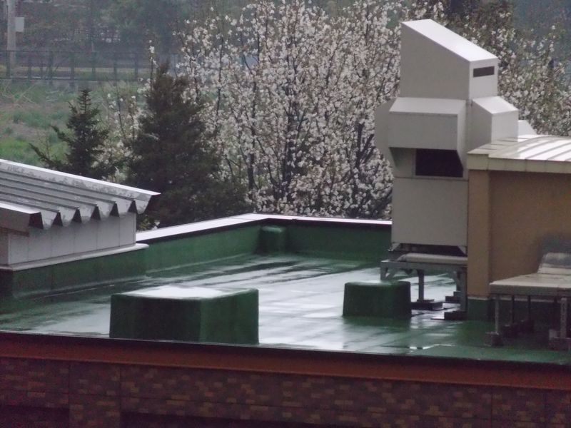 春の雨_c0025115_22115413.jpg