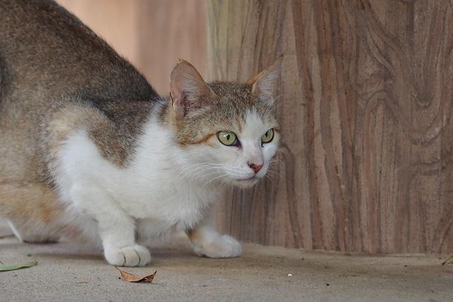 レンゲと母猫   _f0214527_1082652.jpg