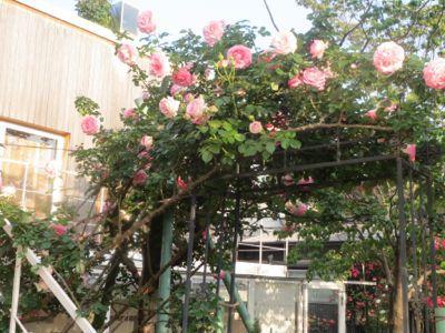 薔薇のカフェ_c0223630_22382587.jpg