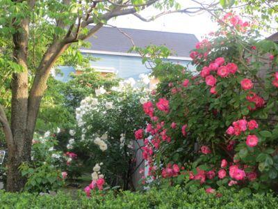 薔薇のカフェ_c0223630_2238277.jpg