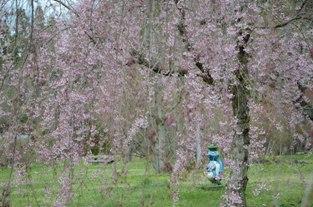 県南花見のたび_c0299631_11372537.jpg