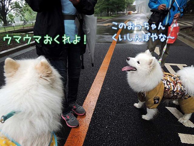 またまた大阪からいらっしゃ~い♪_c0062832_17404095.jpg