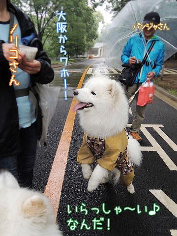 またまた大阪からいらっしゃ~い♪_c0062832_6121319.jpg
