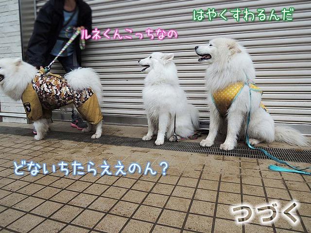 またまた大阪からいらっしゃ~い♪_c0062832_6152752.jpg