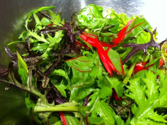 北海道八雲の野菜達が元気です。&5月23日(木)のランチメニュー_d0243849_23474334.jpg