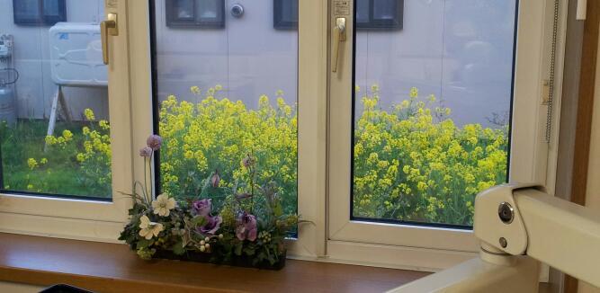 診療室の窓から見える眺め♪_c0151053_1622884.jpg