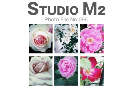 STUDIO M2 Photo File No.096「ROSE+iPhone」_a0002672_1551469.jpg