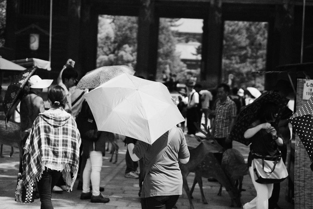 初夏の奈良①_f0167977_11385989.jpg