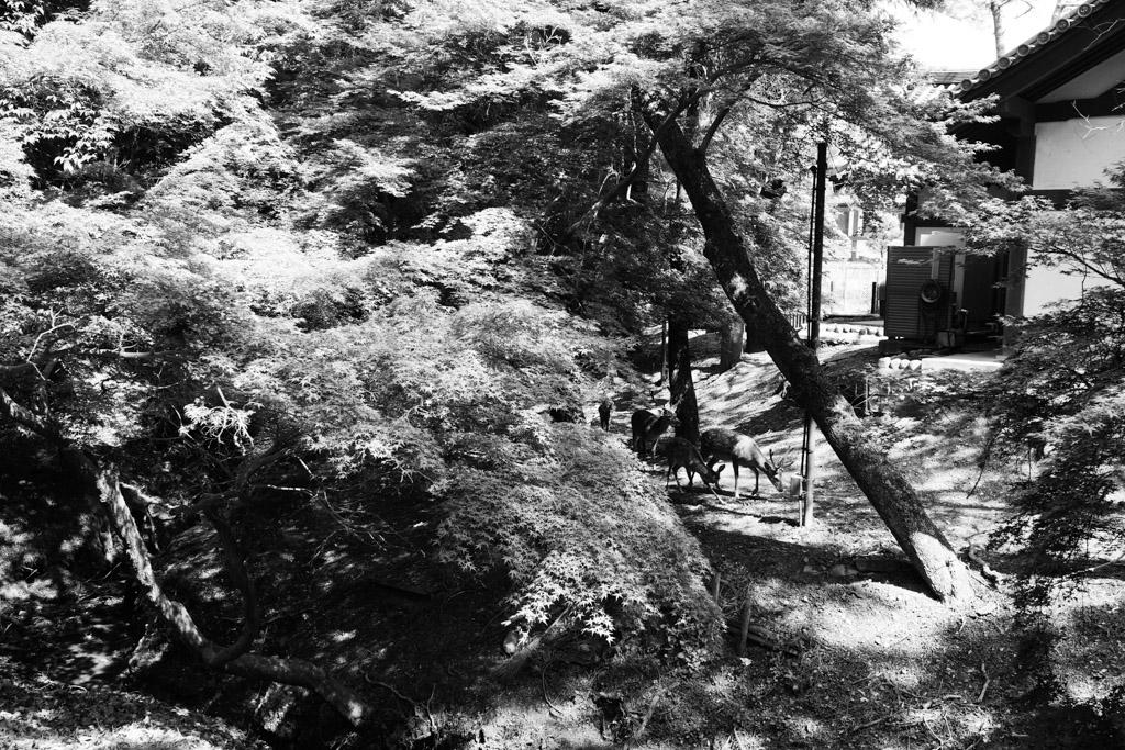 初夏の奈良②_f0167977_11462989.jpg