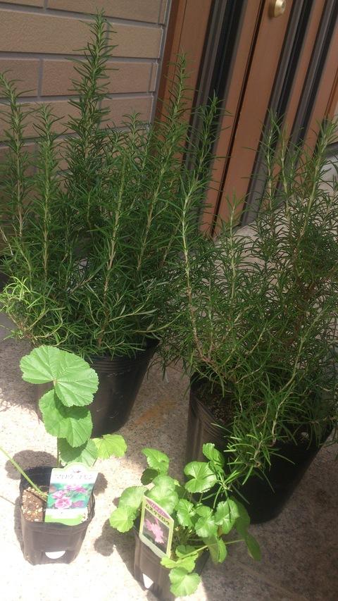 昨日は庭仕事してました。_d0182179_15454841.jpg