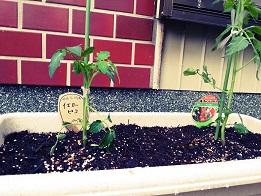 栽培、始めました。_f0172281_929498.jpg