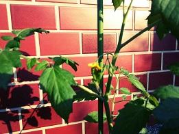 栽培、始めました。_f0172281_9304795.jpg