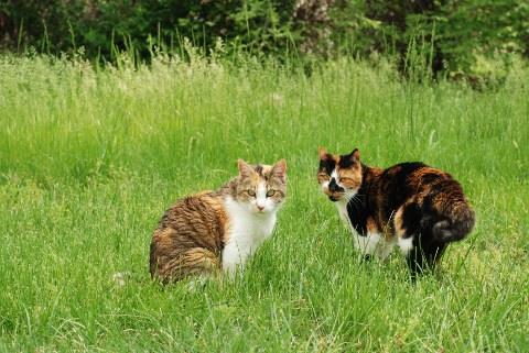 草原の猫_b0253205_14263992.jpg
