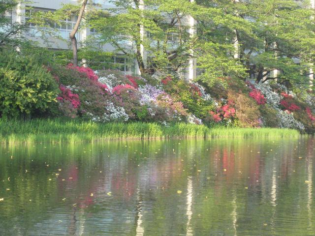 *千秋公園*_e0197227_1541167.jpg