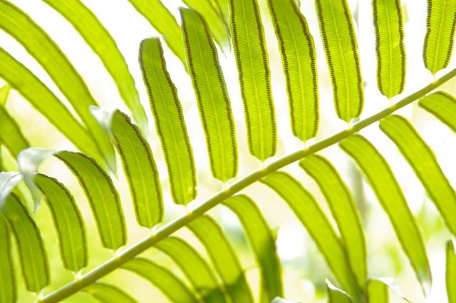 f0029038_1723014.jpg
