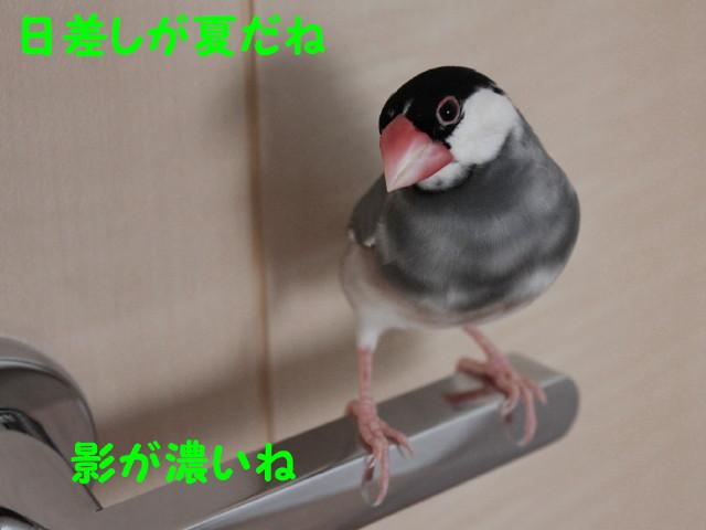b0158061_19385060.jpg